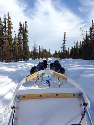 Alaskan Dog Mushing School