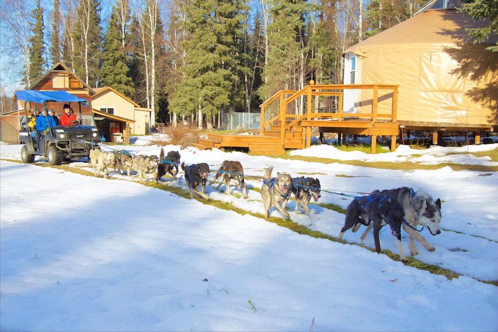 Just Short of Magic Sled Dog Rides Fairbanks Alaska