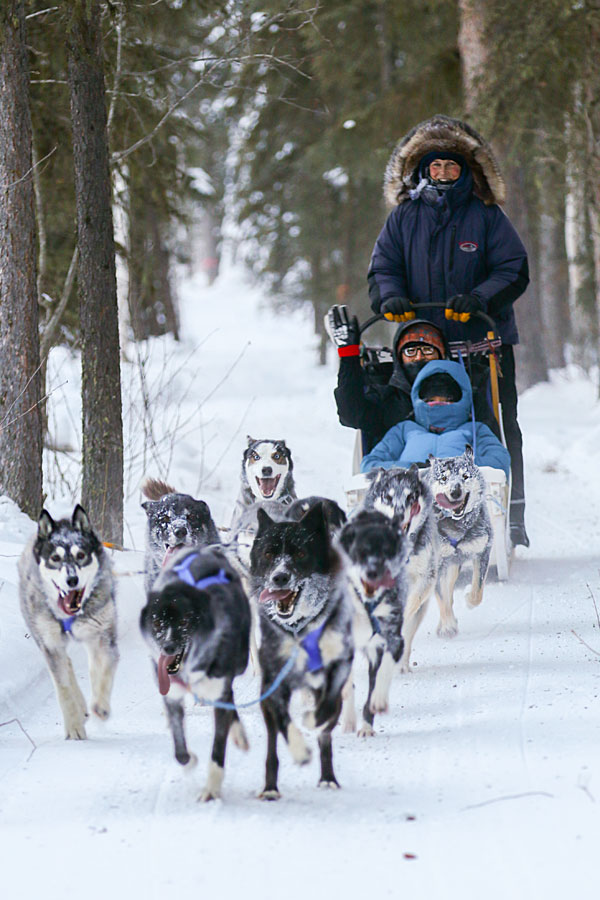 Dog Sled Rides Fairbanks Alaska - Just Short of Magic