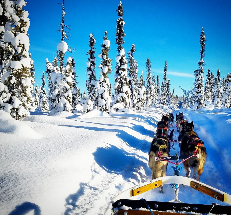 Dog Sled Tours Alaska