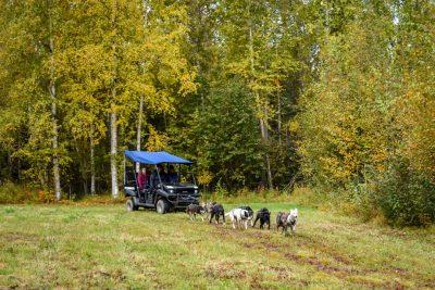 Fall ATV Sled Dog Rides