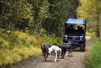 Fall Alaska Sled Dogs