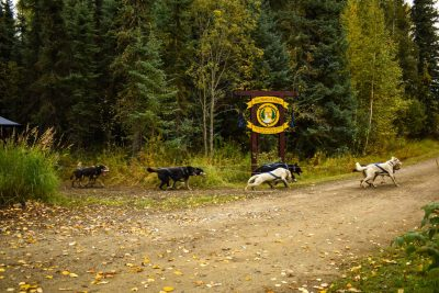 Fall Sled Dog Rides Fairbanks